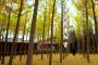 首届西北道教论坛·系列映像之一 :永远的重阳宫